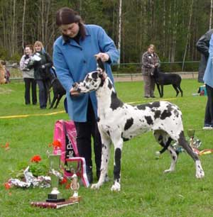 Jättiläisen Calamity Jane PEN 1.Kp, ROP-Pentu, BIS 1. / Female pups 1. BOS-Puppy, BEST IN SHOW 1.